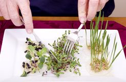 Grow Your Own Dinner. What do we eat? Do you know where your food comes from? Is what we eat edible Stock Image