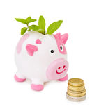 Grow your savings - piggy bank Stock Images