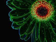 Growed au néon de fleur Photographie stock