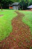Grower grass. Green grower grass in park Royalty Free Stock Photos