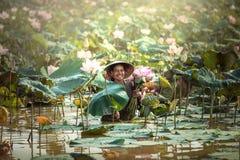 Growers lotus Royalty Free Stock Photo
