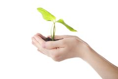 Growh green Stock Image