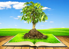 Growing. Tree growing from a book on wooden table. Concept of growth of knowledges from reading of books Royalty Free Stock Photography