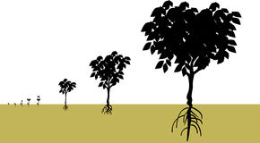 Growing. Vector illustration for a growing process from a seed becomes a tree, biological environment Stock Image