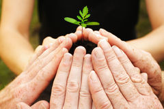 Growing. Six hands around a small seedling, protecting his growing royalty free stock photography