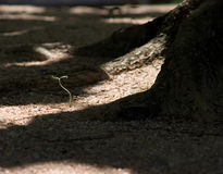 Growing. A single plant which grow at the beach Royalty Free Stock Image