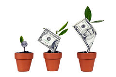 Growing American Money Sequence Isolated Royalty Free Stock Photos
