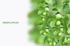 Growing Apples, collage Royalty Free Stock Photography