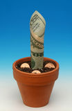 Growing assets/seed money 2 Royalty Free Stock Photo