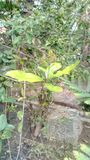 Growing attractive sapling stock photos
