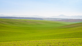 Growing barley field Royalty Free Stock Images