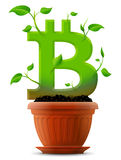 Growing bitcoin symbol like plant with leaves in flower pot Royalty Free Stock Image