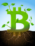 Growing bitcoin symbol like plant with leaves and roots Stock Photo