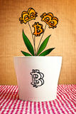 Growing bitcoins in flower pot, conceptual image Stock Photos