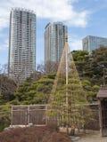 Growing bonsai Stock Image