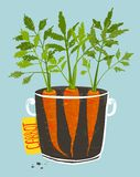 Growing Carrots with Green Leafy Top in Mug Royalty Free Stock Image
