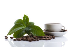 Growing coffee Royalty Free Stock Image