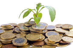 Growing Coins Royalty Free Stock Photos