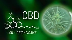 Free Growing Commercial Medical Cannabis. Herbal Alternative Medicine Concept. CBD Oil Cannabidiol Chemical Formula. Growing Premium Stock Photo - 143064850