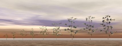Growing cotton plants - 3D render Stock Image