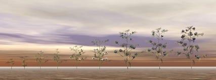 Growing cotton plants - 3D render Stock Image