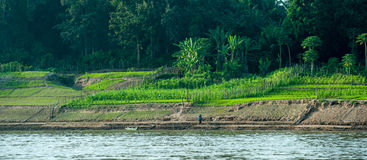 Growing crops on river banks of Mekong in Laos Royalty Free Stock Photos
