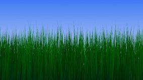 Growing 3d grass stock footage