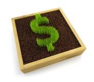 Growing dollar symbol. Isolated on white background Stock Photo