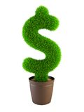 Growing dollar symbol Royalty Free Stock Photography