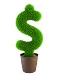 Growing dollar symbol. Isolated on white background Royalty Free Stock Photography