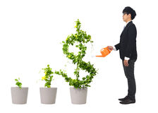 Growing dollar tree Stock Photography