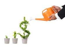 Growing dollar tree Stock Images