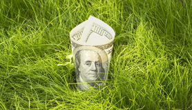 Growing dollars. One hundred dollars growing in green grass Royalty Free Stock Image