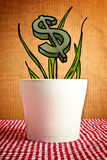Growing dollars in flower pot, conceptual image Stock Photos
