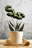 Growing dollars in flower pot, conceptual image Royalty Free Stock Photos
