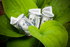 Growing dollars. Selective focus Stock Image