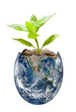 Growing earth Royalty Free Stock Image