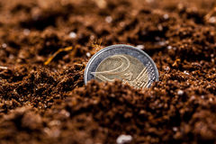 Growing euro coins Stock Images