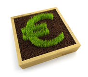 Growing euro symbol Royalty Free Stock Image