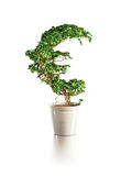 Growing euro tree Stock Images
