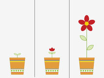 Growing flower Stock Photography