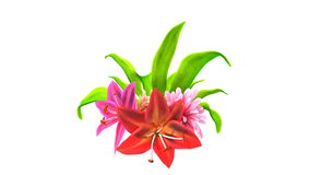 Growing flowers. Abstract 3d animation stock video footage