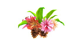 Growing flowers with leafs and pine cones. 3d animation stock video