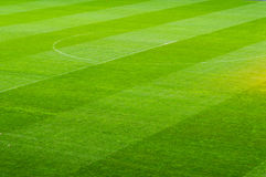 Growing football field Stock Images