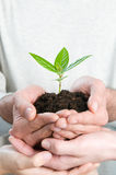 Growing fresh sprout Royalty Free Stock Images