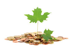 Growing funds. Different coins with a maple leaf Royalty Free Stock Photos