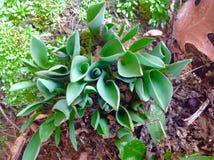 Growing in the garden Royalty Free Stock Photos