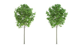 Growing garden trees. HD animation. In isolation. Black and white mask stock video footage