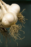 Growing garlic, harvest Royalty Free Stock Photos
