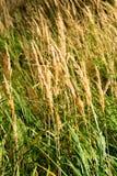 Growing grain Stock Photos